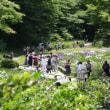 明治神宮御苑の花菖蒲を拝観してきました