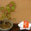 過去の盆栽、植木のまとめ