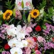 5月21日 明日の誕生花・ゆかりの花 花言葉は?(*^O^*)☆