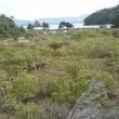 沖縄県豊見城市長選、辺野古新基地建設反対の山川仁氏当選。