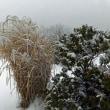 雪の東山へ その2