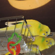 【902】放鳥中の遊び場