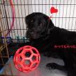行ってきました、富士ハーネス(日本盲導犬協会)
