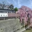 わが町南材・石橋屋のしだれ桜・・・