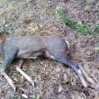 12月14日の狩猟