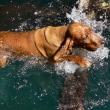 フォト&幻想 幸せな犬