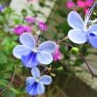 あけびの実  他◇ 紫カラー 旬花 ◇◆
