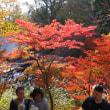高尾山と甲州街道いちょう並木の紅葉 2018.11.11