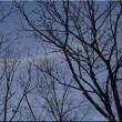 日の出&今日の森