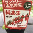 トマト他を追加で植付けしたYO!(^^)!