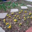 寒い日が続いても春は近づいています