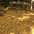 西尾市歴史公園の紅葉
