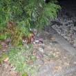 11月15日(木)プランターのひき逃げ