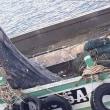 ジンベイザメ捕獲で漁船船長に多額の罰金  タイ