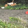 子猫が増えてるヽ(´o`;