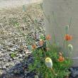 植物の生き方