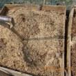 堆肥作り(温床作り)を再スタート