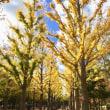 秋の茨城県立公園.洞峰公園