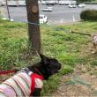犬連れ大移動の顛末2