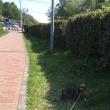 狭山湖散歩