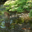 奈良への旅 3