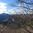 桜山まで林道サイクリング