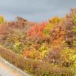 冬の小諸高原・・・飯縄山公園で黄葉散歩・・・小諸高原美術館
