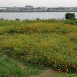 鳥と花を求めて旧中川から荒川河川敷