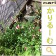 2011/06/03(09:36)A撮影写真 猫H 花