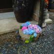 花の山寺普門寺の紫陽花