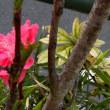 植栽、樹種不明