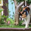 マレーシア猫旅日記3日目*ペナン島の猫だまり!