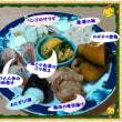 ☆ こんな、ワタイの夕食 ☆