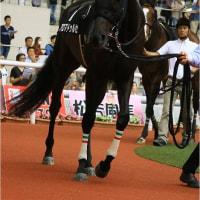 アロマドゥルセ、ミルコの好騎乗で3勝目