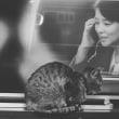 猫と石田ゆり子