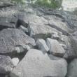 【熊本城の震災復元工事】熊本だからこそ分かります。