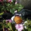 小春日和に誘われて蝶が花の蜜吸いに酔いしれ…