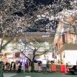 たまプラ夜桜