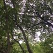 森林公園の赤そば&コキアの紅葉 2017