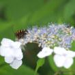 ★夏の烏川渓谷須砂渡の水辺と植物 2018
