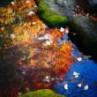 『高麗の色』 鯉も