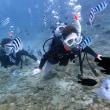 ジンベイと遊ぶ。沖縄ダイビング 那覇シーマリン