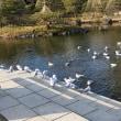 白鳥庭園(30年1月10日)