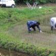 田んぼオーナー 草刈り&除草作業