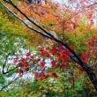【秋を見つけにゆこう♪】