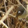 諸木川の鳥たち・・・この冬初のカワセミも
