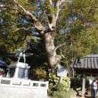 3.日本三大樟の御神木があった鷲田神明宮へ