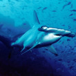 絶滅危惧のサメは食卓から消える  英国