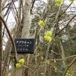 片倉城跡公園 カタクリ開花