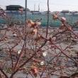 ブルーベリーの花が